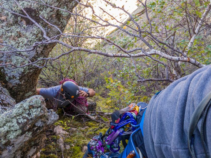 Enjoyable vertical moss and bush climbing
