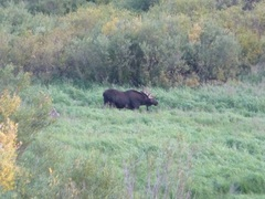 Rock Climbing Photo: Yeah there really was a moose in the meadow.. My w...