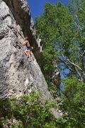Rock Climbing Photo: Ivy