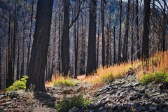 Rock Climbing Photo: Burned forest on South Fork.