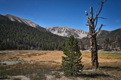 San Gorgonio and Jepson Peak from Dry Lake.