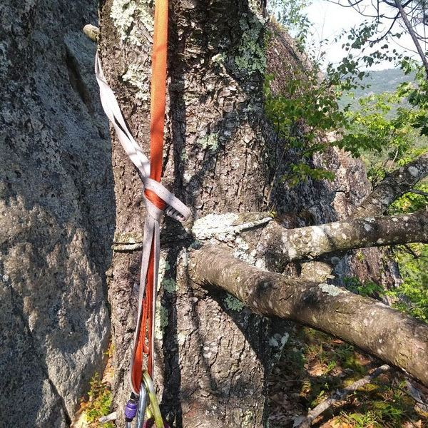 Belay tree atop passing thoughts