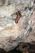 Rock Climbing Photo: Exposure, a steep 6c