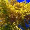 Autumn colors make me happy!!