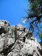 Rock Climbing Photo: Cactus Butt