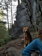 Roskie chillin' on the belay ledge of Goddess. Really though, the ledge isn't super dog friendly. You'll have to lift your pup about chest high