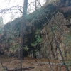 Dishman Bouldering Wall