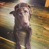 My pup bailey!