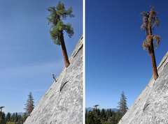 Rock Climbing Photo: It's like losing a member of the family. (Dome Roc...