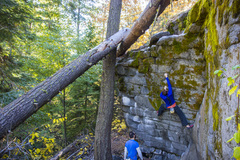 """ferrells working from dihedral to face on the Tigerlilly Boulder. Photo by Tol Lau, teacher and AKA """"The strongest 5.13 climber in the world""""."""