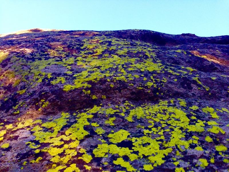 Lichen to the sky!