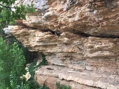 Rock Climbing Photo: Fox pups near shuttle cave Summer 2017