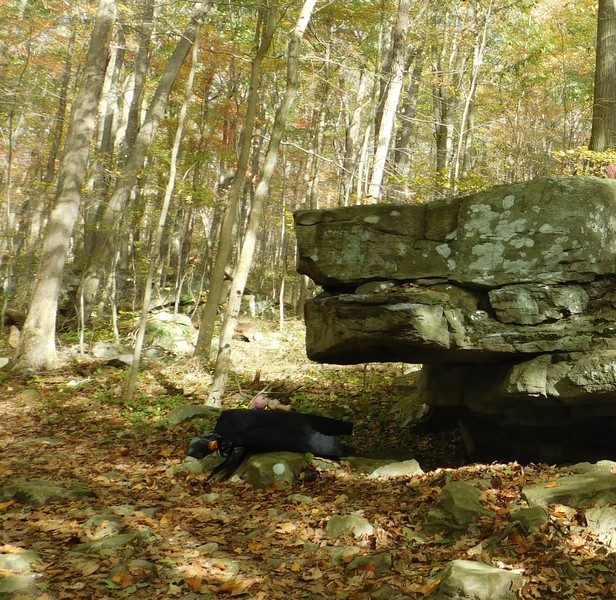 "#4 on topo ""Dog face rock"""