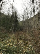 Rock Climbing Photo: Looking up the road from the start of the trail on...