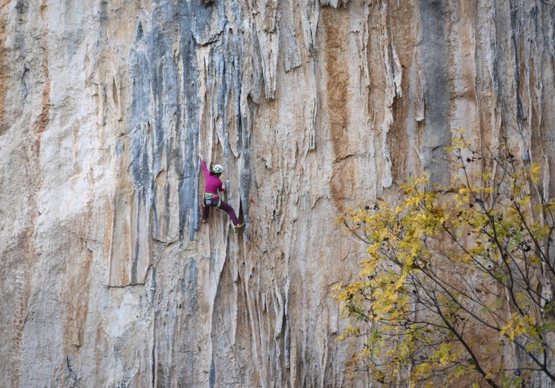 Alison Fritz on the lower portion of kneebaropoulos
