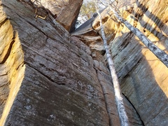 Climb is the crack right behind the tree