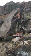 Shark Bait V4 Wushu Grotto