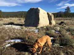 Rock Climbing Photo: The boulder and a dog