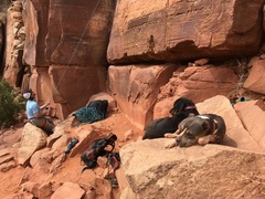 Rock Climbing Photo: Crag rottie and pit bull. Sedentary as heck.