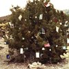 "During the Christmas Season locals decorate the Juniper Trees at the pass, ""hence the name Christmas Tree Pass""."