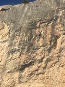 Mado climbing Boxelder.