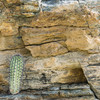 Baby cordon in Split Rock boulder.
