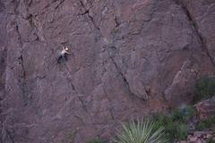 Rock Climbing Photo: xing the 1st crack