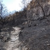 The trail in after the fire