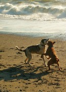 Rock Climbing Photo: The doggers enjoying a day at the beach