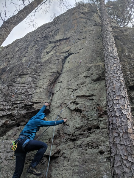 Climb the bolt line on far right of the wall and nearly intersects with the tree near the top.