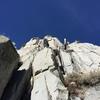 Climber on Cotton Headed Ninny Muggins