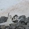 penguins rock climbing, Antarctica