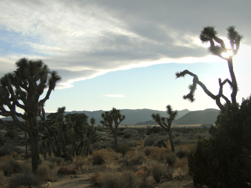Cool cloud-line at Joshua Tree
