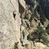 The Scientist - Boulder, CO