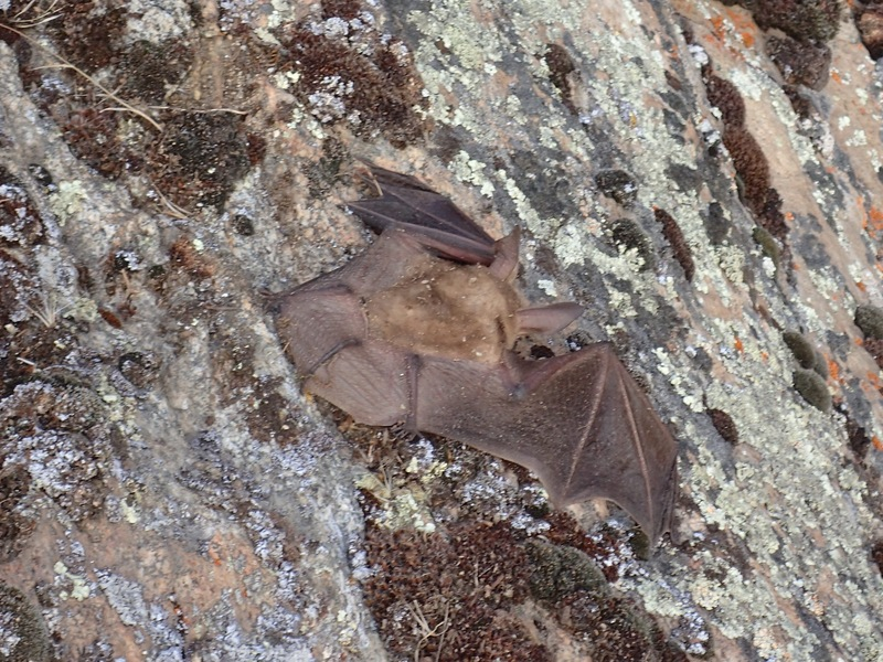 back of bat....