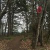 Saw this red 5 sign just off Rocky Butte Rd in early 2018 marking the path to the top of the wall. If you follow the path straight you go directly to the top of Old Flakey