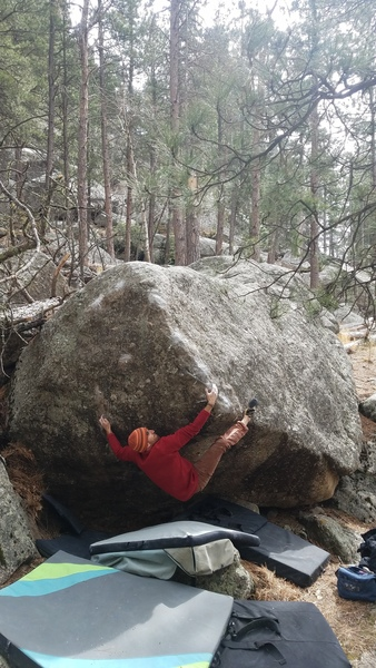 Shock the Monkey V7