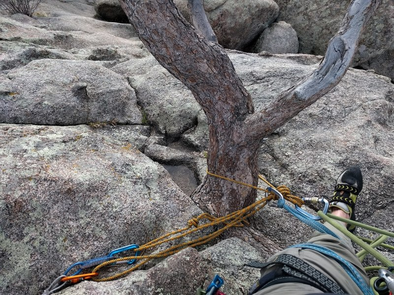 The tree anchor at the top of the route.