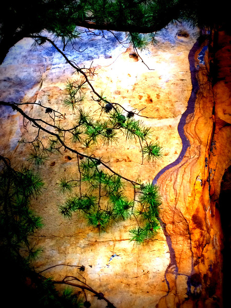 Still life at the New River Gorge