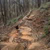 New trail improvements by CCC volunteers and Friends.  Take the trail uphill and right for cliffs.