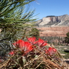 Indian paintbrush on the ascent