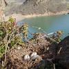 Goose nest above Ren Wall
