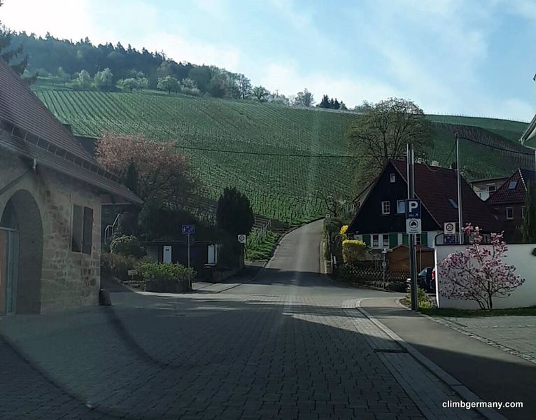 From here, in Hindenburgstrasse, head directly up into the vineyards to the Saengerheim parking lot
