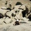 Lori climbing Dandelion
