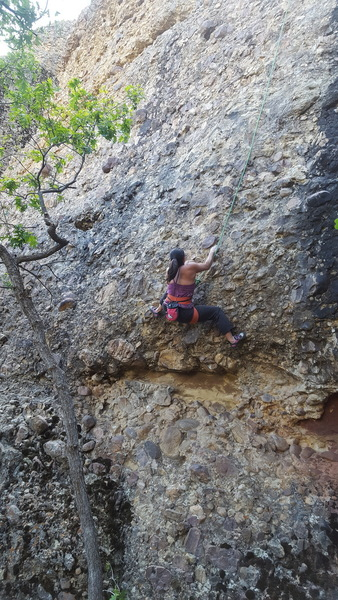 Joi Matsukawa getting the first TR ascent of Sassafras.  She wasn't into leading that year, but managed to get over 50 first toprope ascents in 2017!