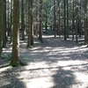 After walking the 200m uphill and following the trail around a left curve, take this trail to the left.
