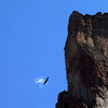 how's that for wingspan?  eagle soaring on the southern tip of smith rock.