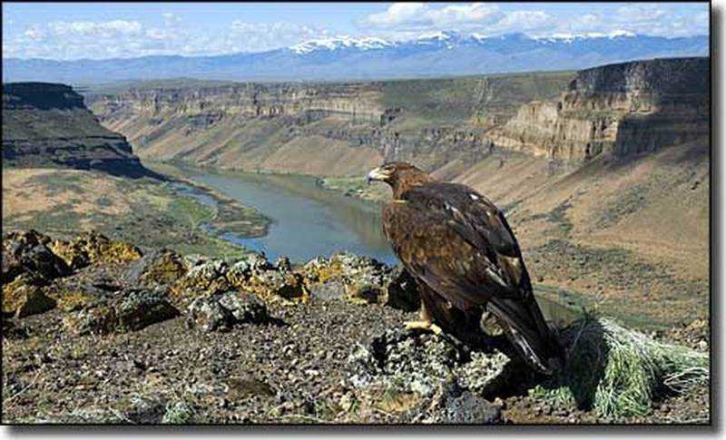 Morley Nelson Snake River Birds of Prey NCA