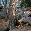Bobcat sighting in Angeles National Forest.