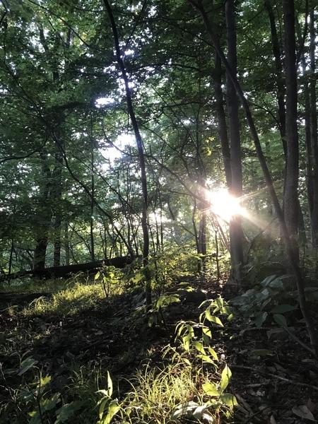 Sunset along the upper trail